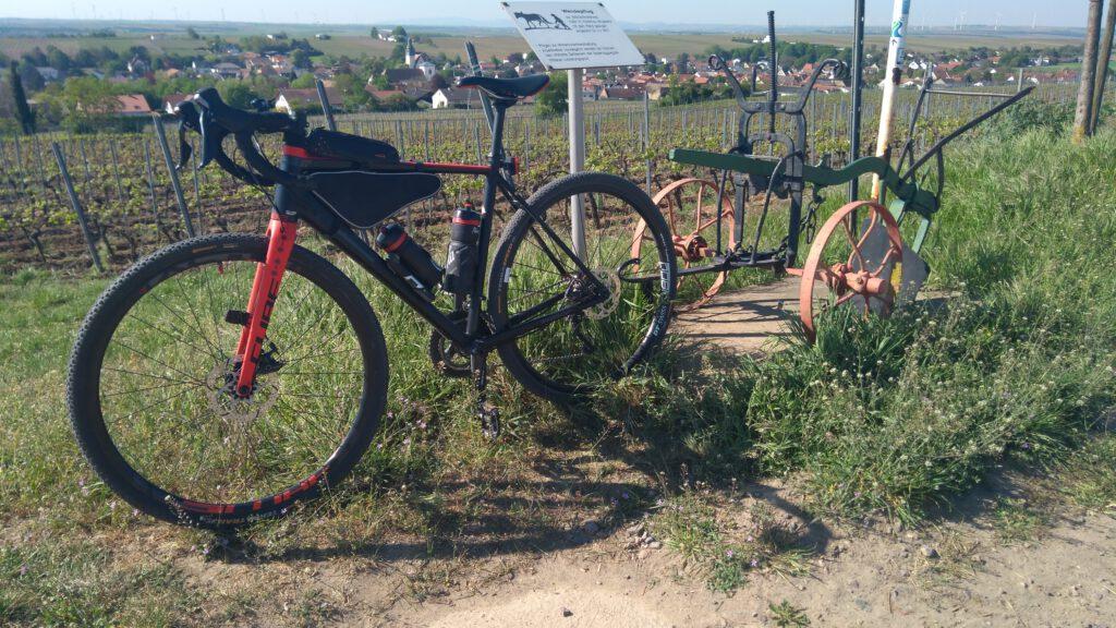 Auf dem Bechtheimer Weinlehrpfad